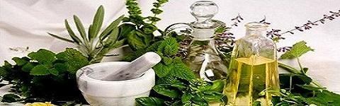 გურიაში გავრცელებული სამკურნალო მცენარეები